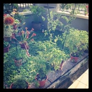 Zen Garden circa May 2012