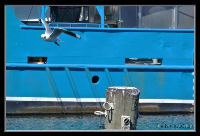 Seagulls @ Cicerello's