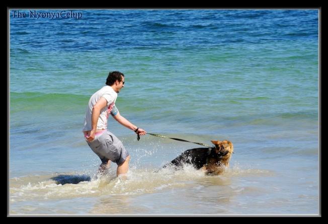Dog @ Freemantle Beach